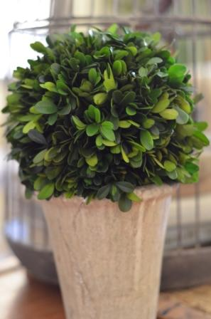 Boxwood and Bargains – Love 'em Both!