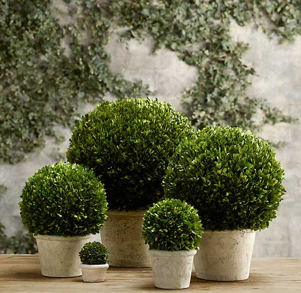Restoration Hardware Boxwood Globes