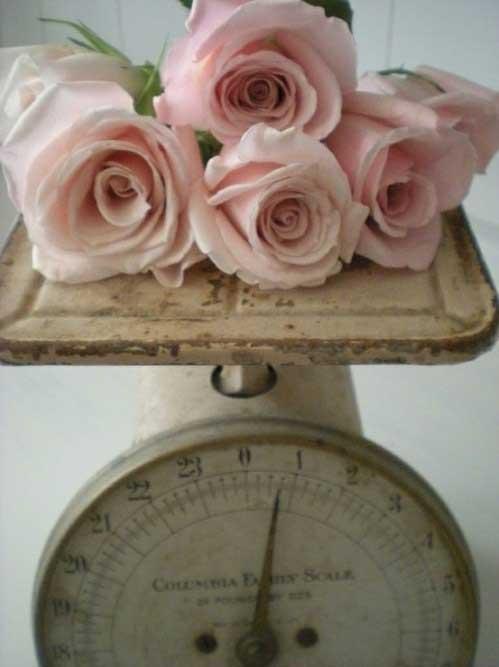 Blush Roses2