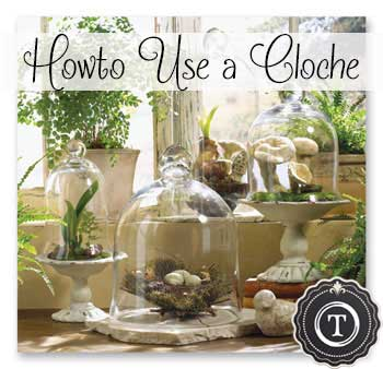How to Use a Cloche