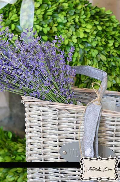 Lovely, Lovely Lavender!