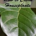 Tidbits&Twine - How to Clean Houseplants
