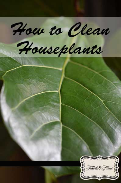 Tidbit Tuesday – Tips for Cleaning Houseplants