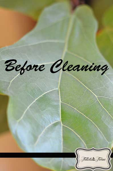 Leaf Before Cleaning - Tidbits&Twine