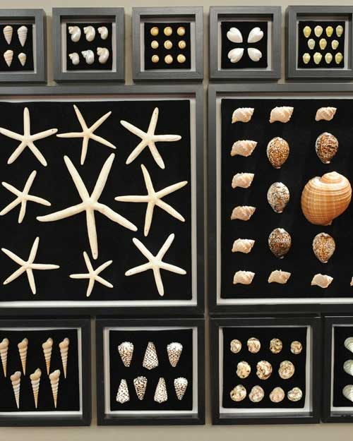 Seashell Collection by Shape