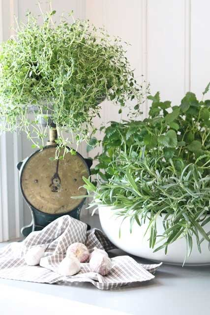 via Pinterest. A vintage scale makes an interesting plant stand for an indoor herb garden.