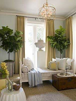 Finding a Fiddle Leaf Fig