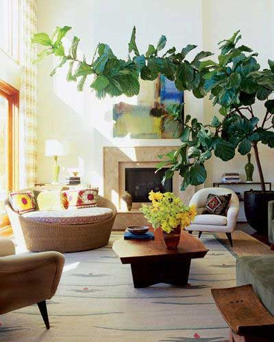 Tidbits&Twine Large Fiddle Leaf Fig