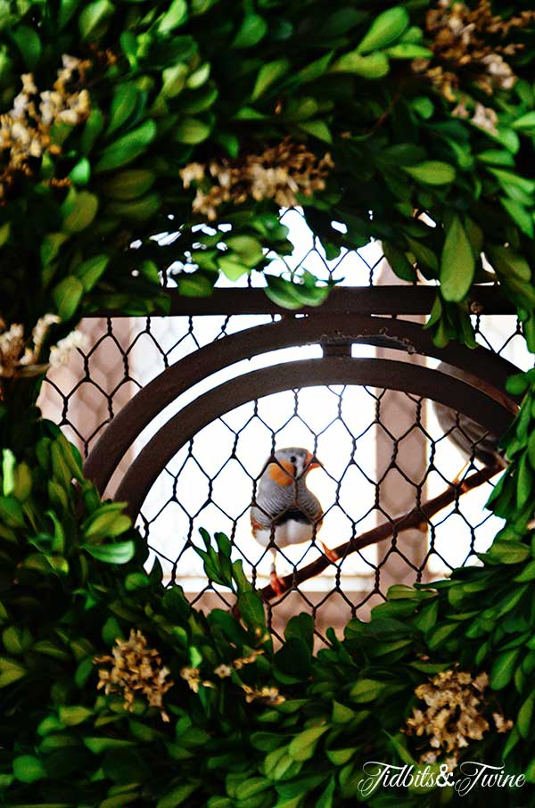 Tidbits&Twine-Boxwood-Wreath-Birdcage