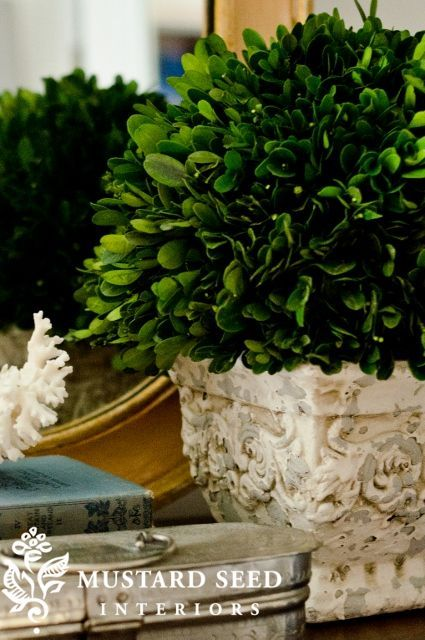 Miss Mustard Seed Preserved Boxwood