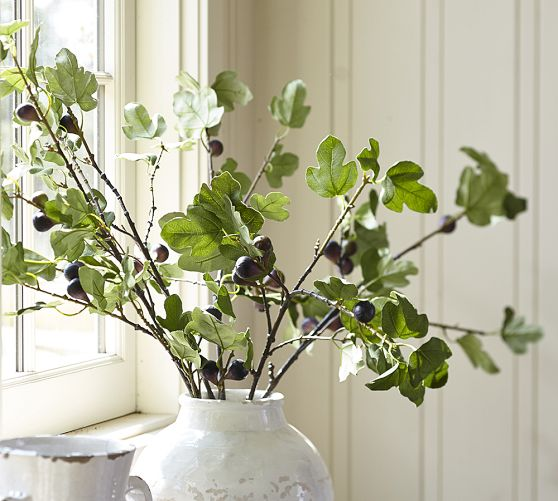 PB Fig Branches in Vase