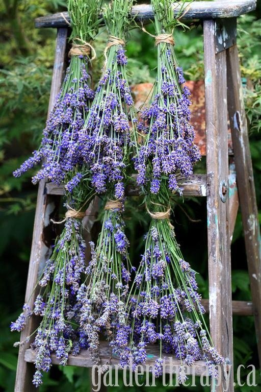 Vintage Ladder Dried Herbs