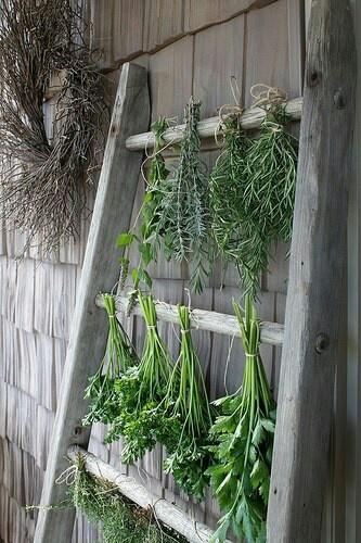 Vintage Ladder Herbs