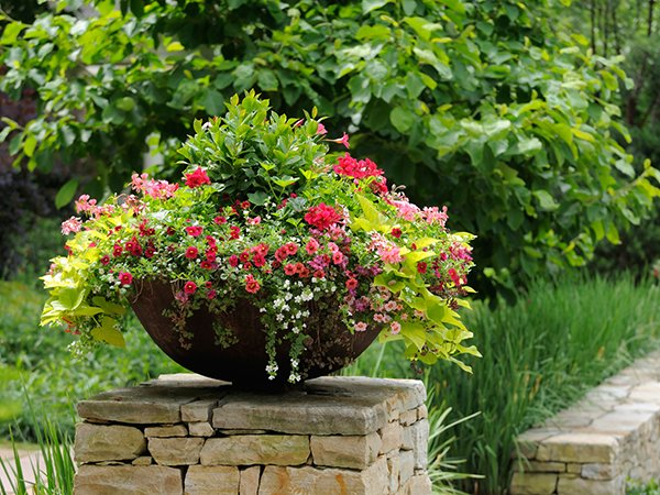 The simple formula for a beautiful container garden for Simple flower garden