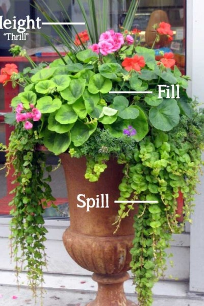 The Simple Formula for a Beautiful Container Garden