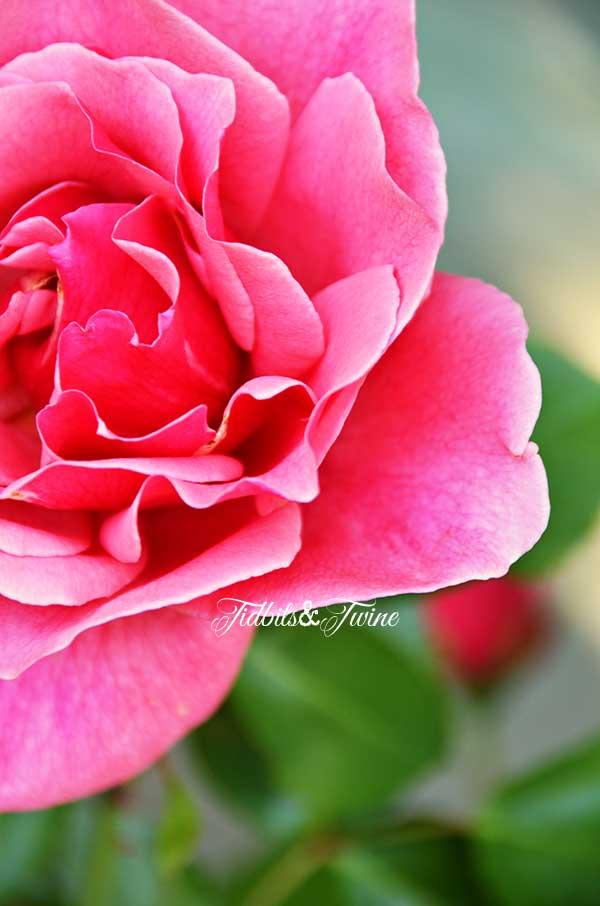 TIDBITS-&-TWINE-First-Bloom