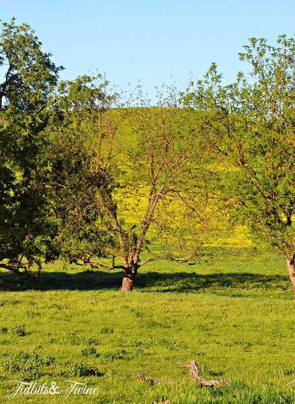 TIDBITS-&-TWINE-Mustard-Field