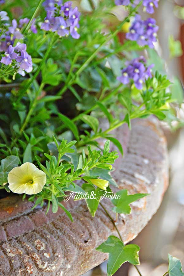 TIDBITS-&-TWINE-Porch-Container-Gardening