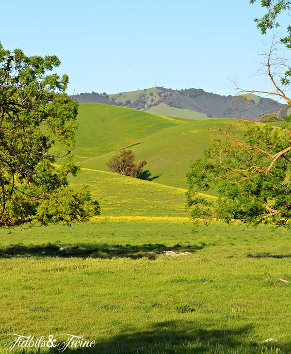 TIDBITS-&-TWINE-Spring-Hills