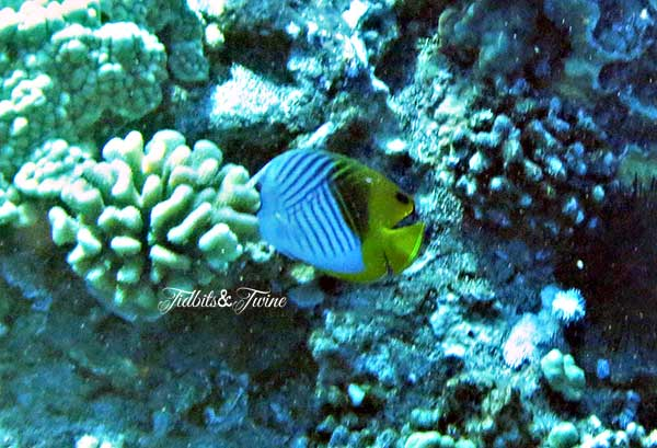 TIDBITS-&-TWINE-Fish-Eating-Coral
