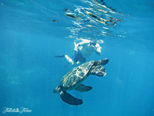 TIDBITS-&-TWINE-Green-Sea-Turtle