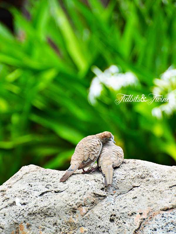 TIDBITS-&-TWINE-Love-Birds