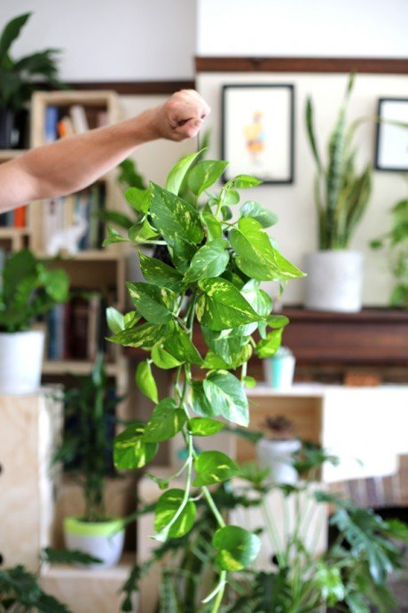 The Best Houseplant For Decorating