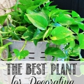 TIDBITS-&-TWINE---The-Best-and-Easiest-Plant-to-Use-for-Decorating