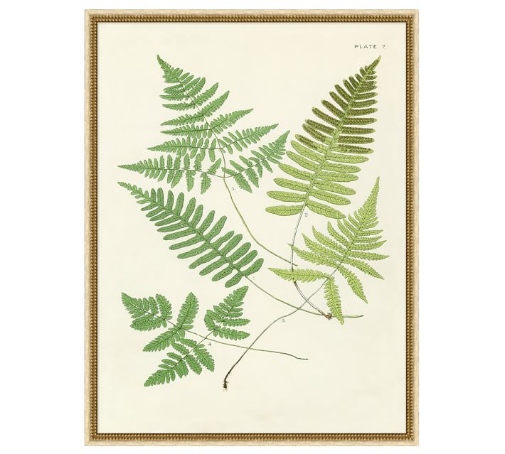 Pottery Barn Green Vintage Ferns Wall Art