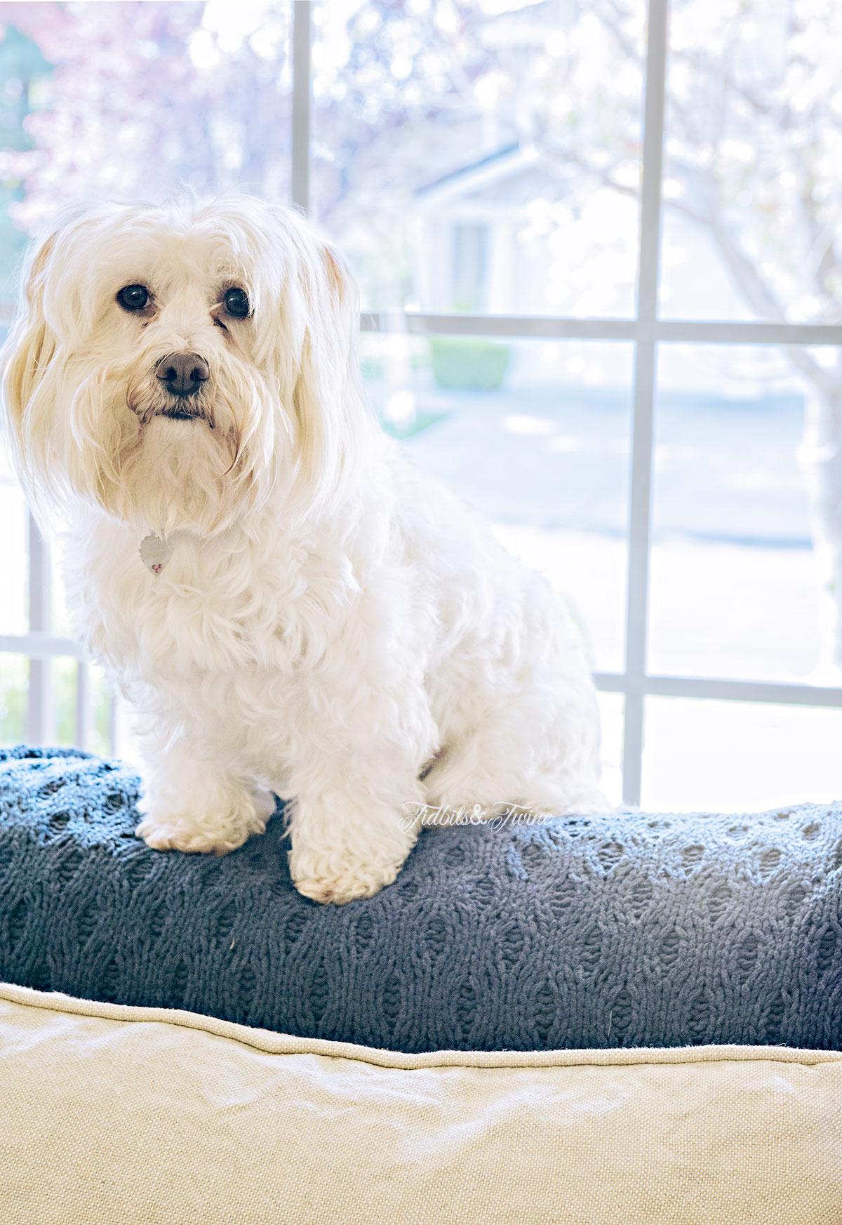 Tidbits&Twine-Maltese-Mimi-Sofa-Spot