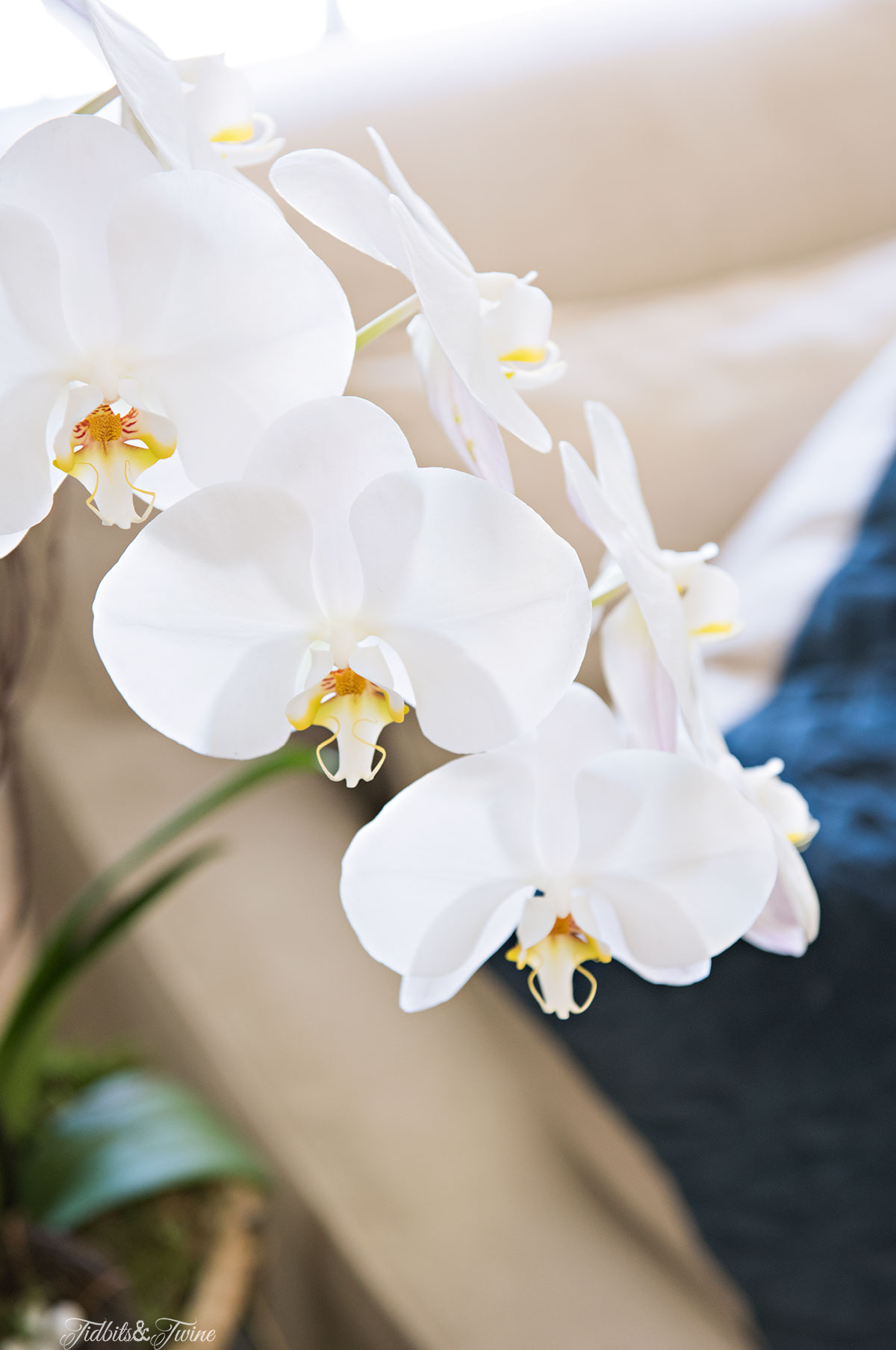 Tidbits&Twine-Spring-Orchid-Living-Room