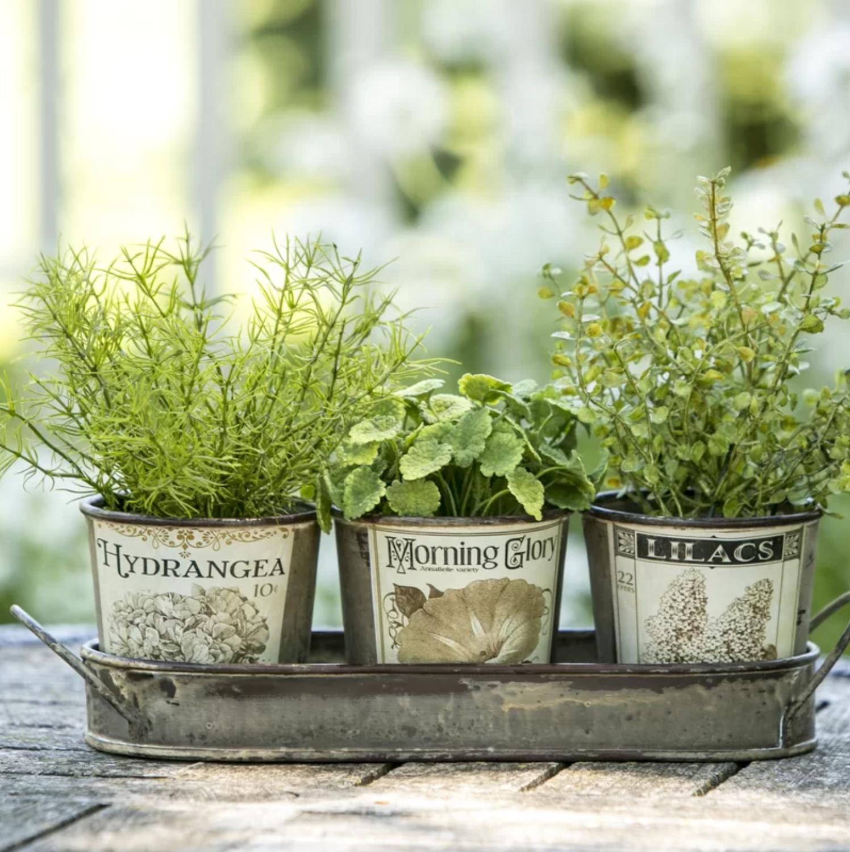 Herb Garden Planter Kit Gift Set