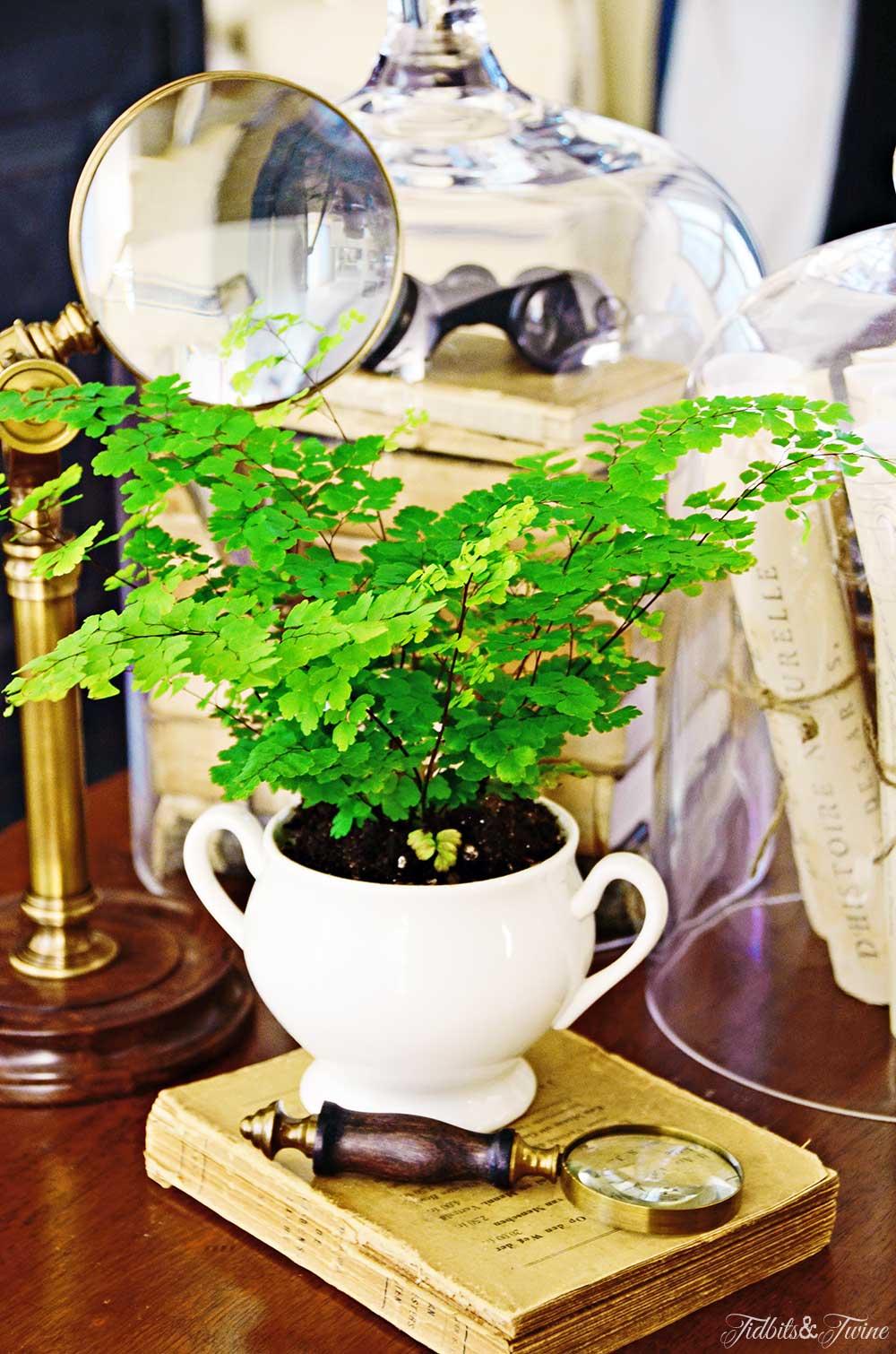 Vignette of maidenhair fern in sugar bowl with books