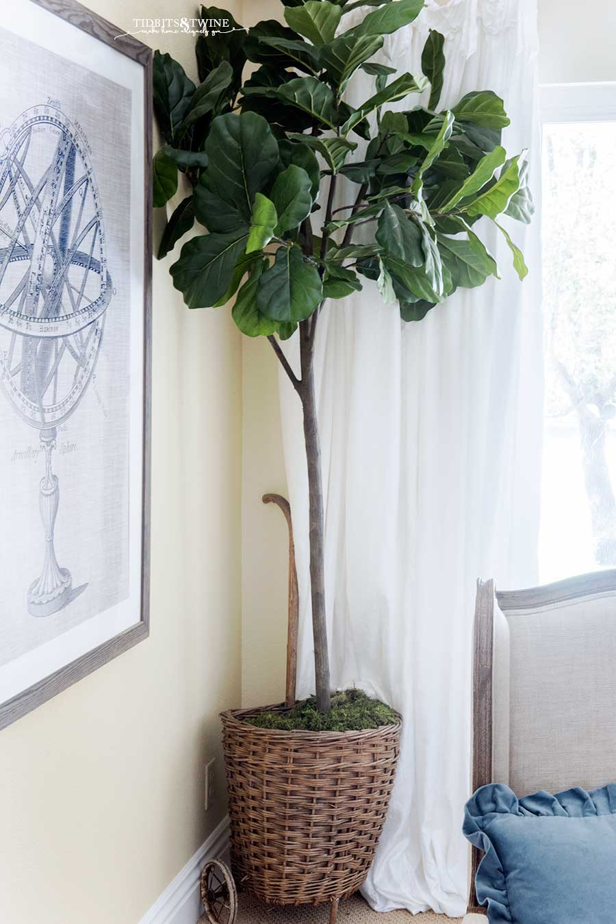 Faux fiddle leaf fig in an antique French market basket