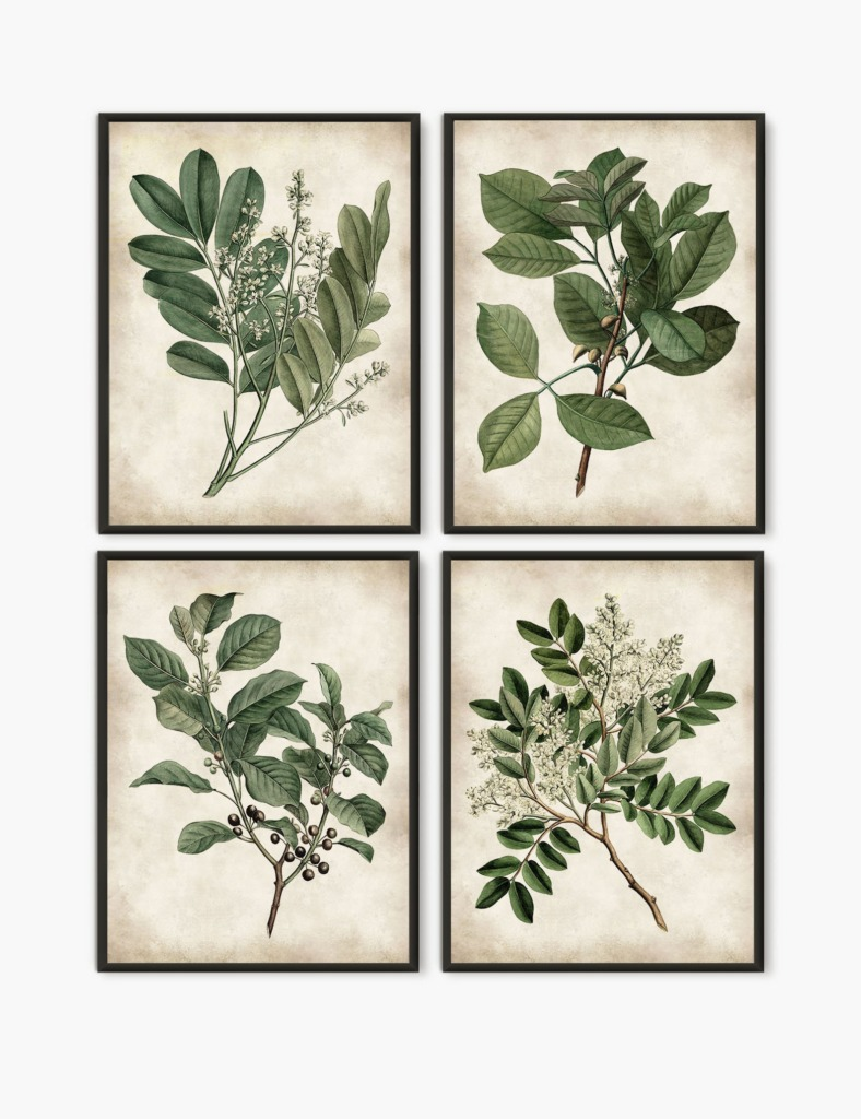 Art collection of four vintage plant botanical images