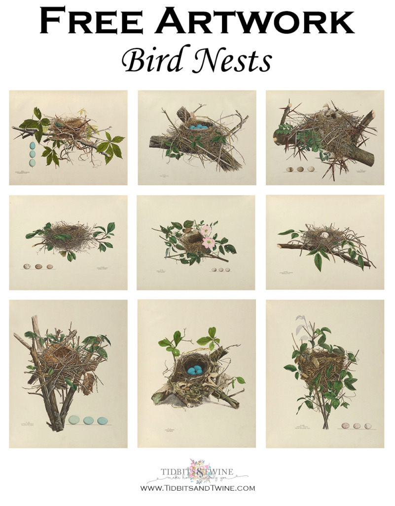 Collage of birds nest art that can be digitally downloaded for free