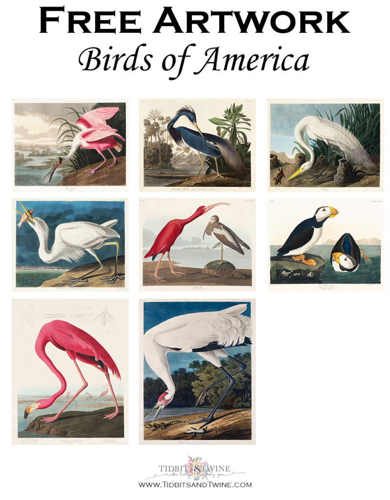 Collage of Birds of America artwork that can be digitally downloaded for free