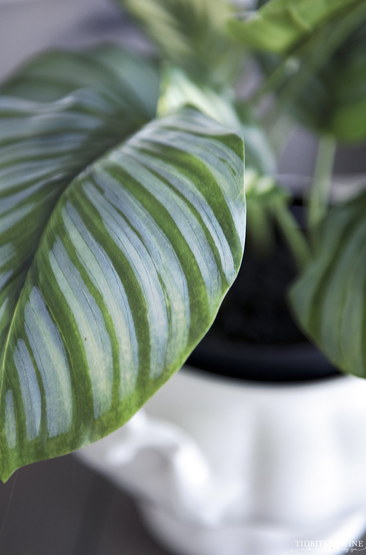 closeup of fake houseplant leaves showing how realistic it looks