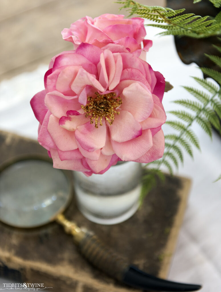 pink rose in a clear vase on top of an antique book next to a magnifying glass