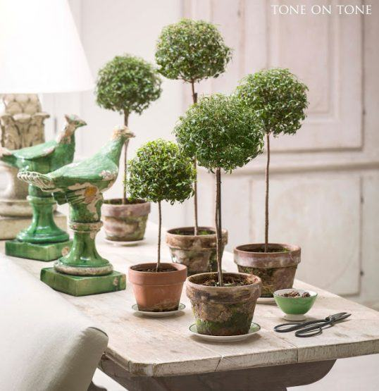 five small myrtle topiaries in terracotta pots on a sofa table next to two ceramic green birds