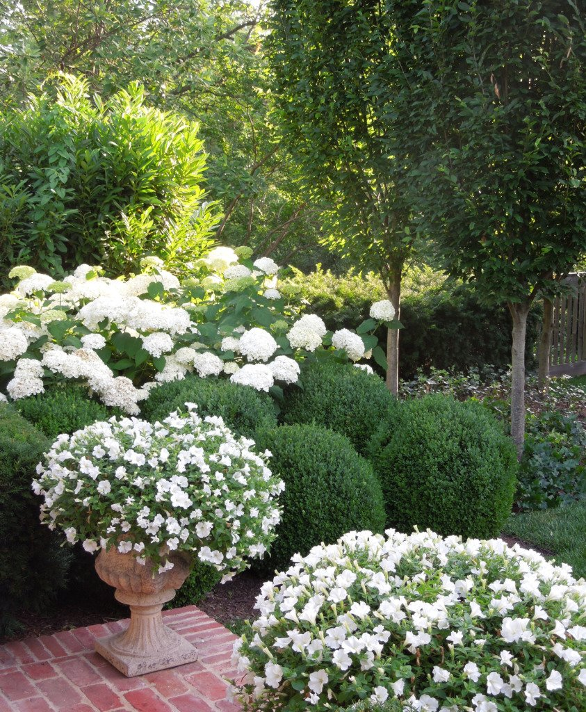 round boxwood headges with large white hydrangeas behind and urns with spilling white petunias