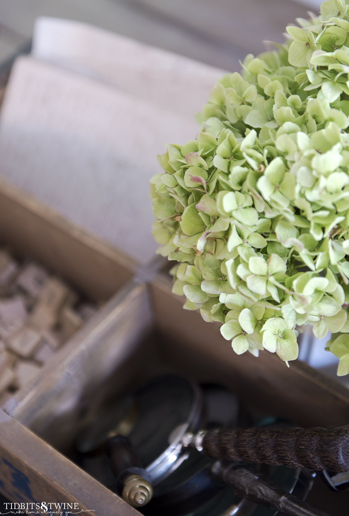 closeup of green hydrangea that is in a white ironstone vase to dry next to a collection of vintage magnifying glasses