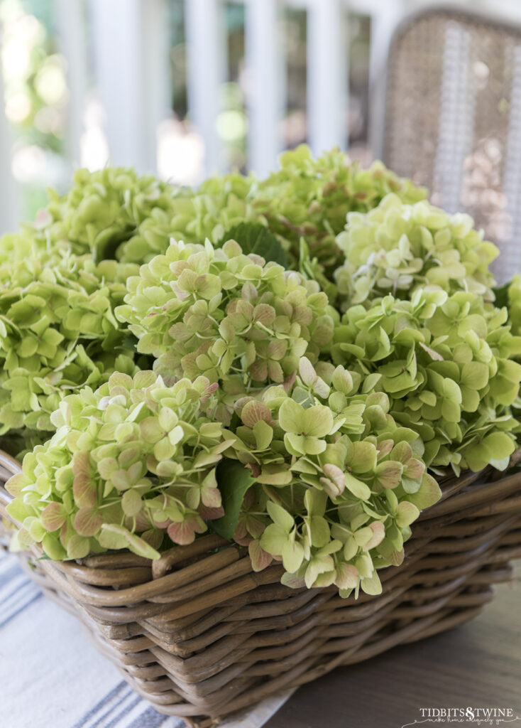 square basket full of green hydrangea that has been cut and waiting to dry