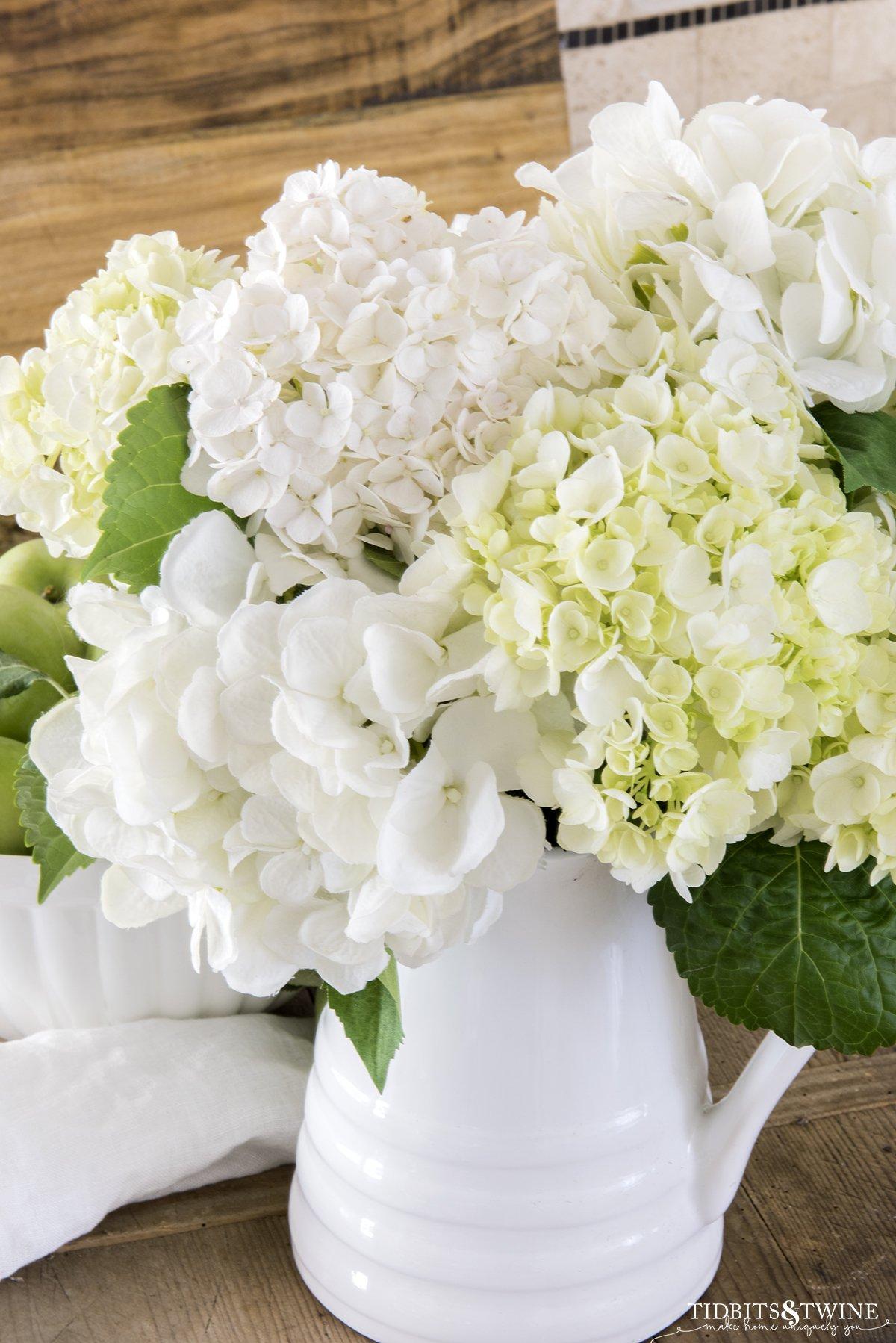 Closeup of white hydrangeas in a white pitcher