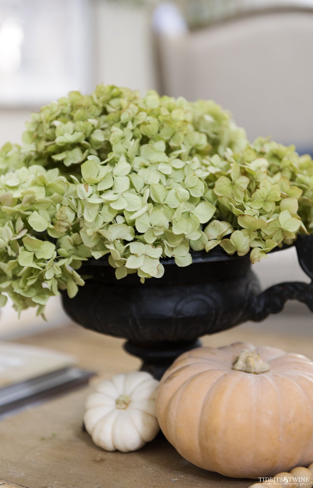 antique black french urn filled with green dried hydrangea and small orange and white pumpkins at base