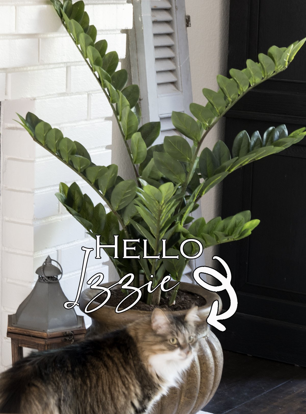 zz plant in a brown pot on white brick fireplace next to small lantern with cat looking at plant
