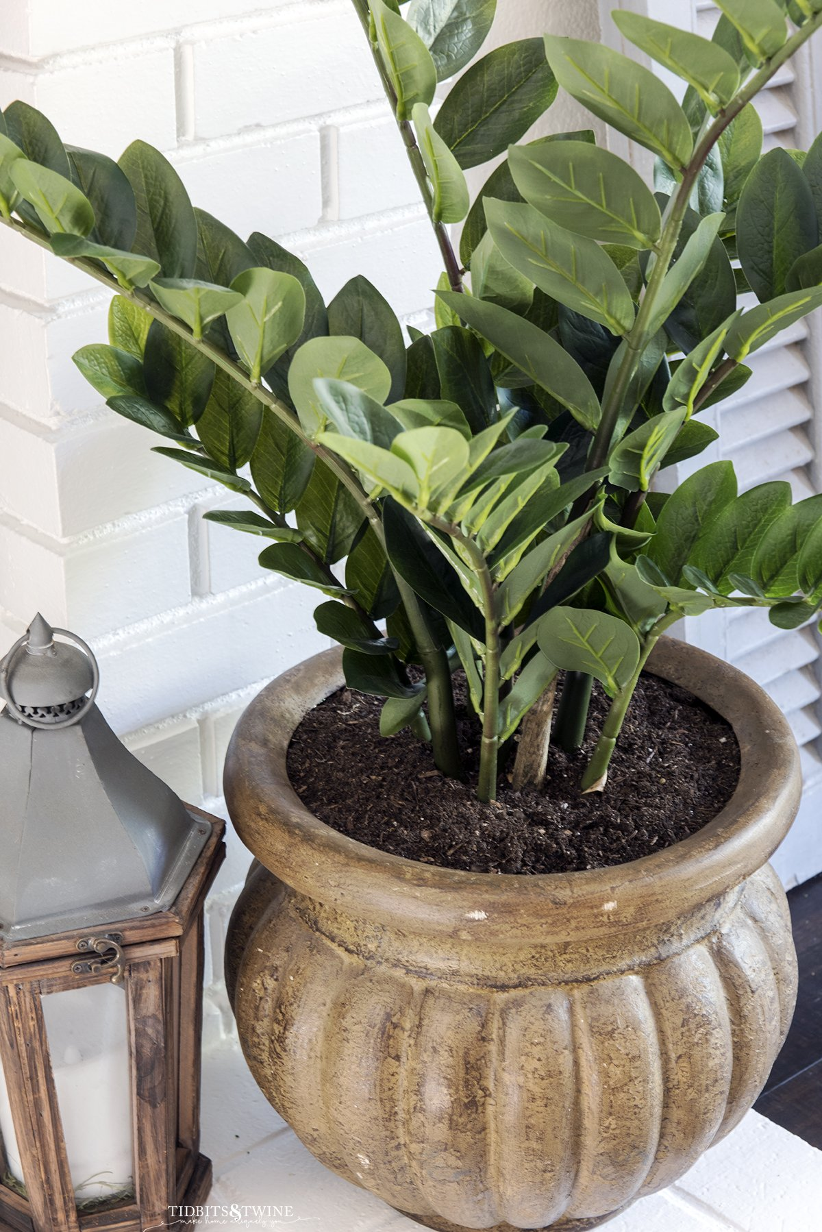 zz plant in a brown pot on white brick fireplace next to small lantern with blue shutter in background