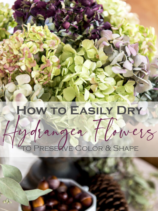 How to Dry Hydrangea the Easy Way!